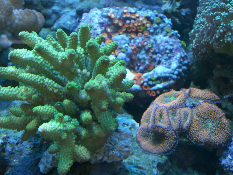 Poseidon Aquarium Daytona Beach Florida